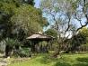 Salah satu sudut Taman Meksiko di Kebun Raya Bogor. Saya selalu memimpikan punya rumah dengan halaman yang tidak terlalu sempit, berumput, ada pohon kersennya, berbagai tanaman hias, dan tanaman obat. Nggak perlu disapu tiap hari, biarkan tampak alami dengan daun berguguran, karena saya sangat malas kalau harus menyapu halaman. Hiks.